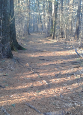 wide trail into two mile farm reservation