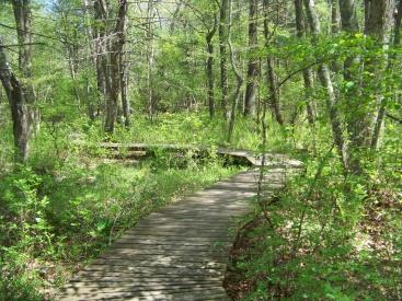 winding boardwalk in willow brook farm preserve
