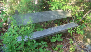 bench at top of staircase in weir river woods