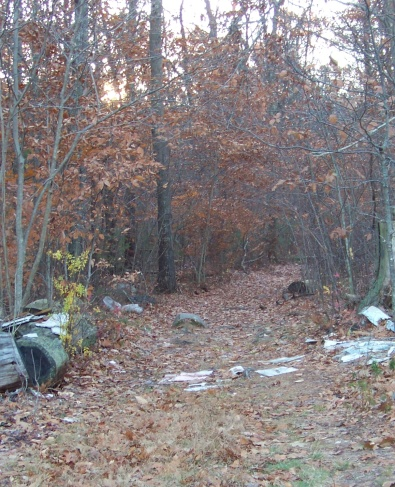 whitman hanson hiking trail enters the forest