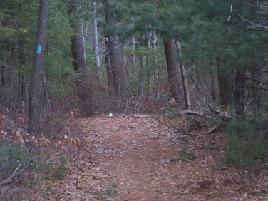 marked cart path in whiton woods