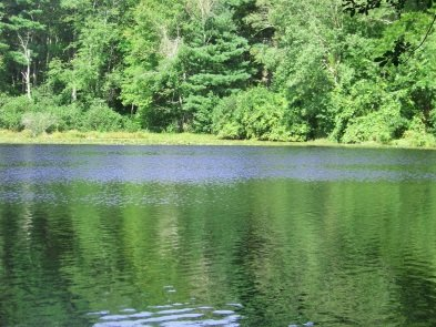 View of Holly Pond from the side trail after the pond.